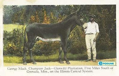Glenwild Plantation